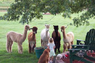 Bear Hollow Farm Photo