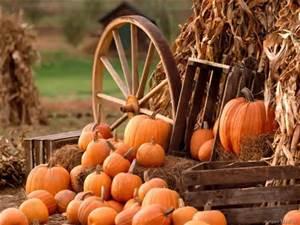 Pumpkin with wheel
